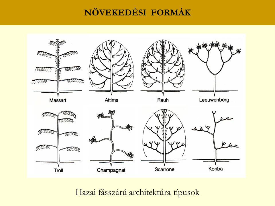 Hazai fásszárú architektúra típusok