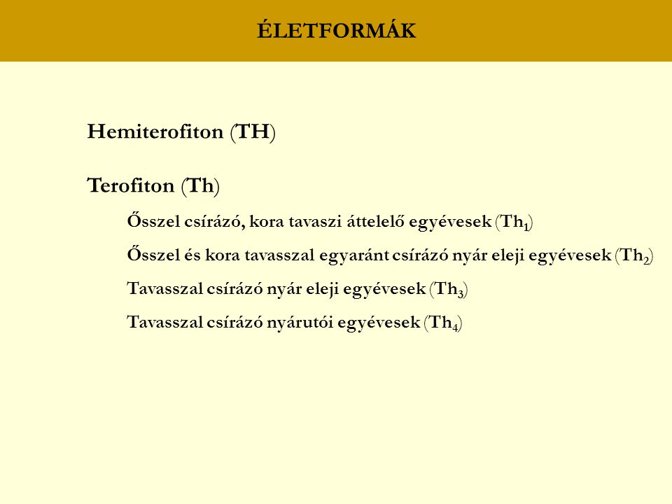 ÉLETFORMÁK Hemiterofiton (TH) Terofiton (Th)