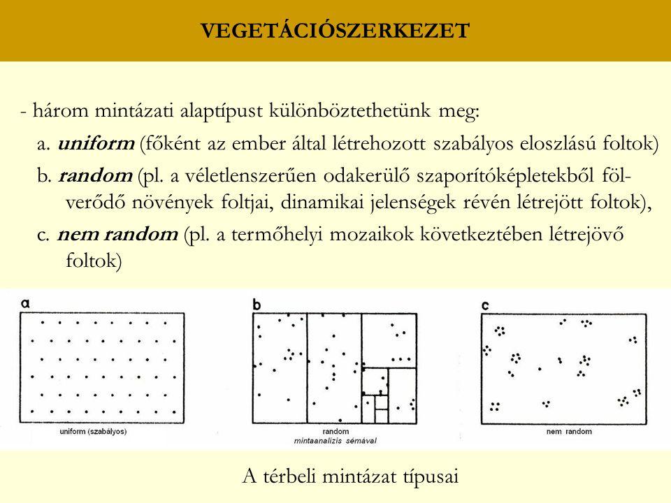 VEGETÁCIÓSZERKEZET - három mintázati alaptípust különböztethetünk meg: a. uniform (főként az ember által létrehozott szabályos eloszlású foltok)