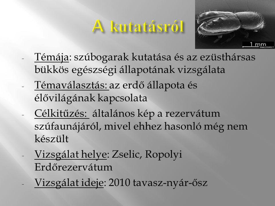 A kutatásról Témája: szúbogarak kutatása és az ezüsthársas bükkös egészségi állapotának vizsgálata.