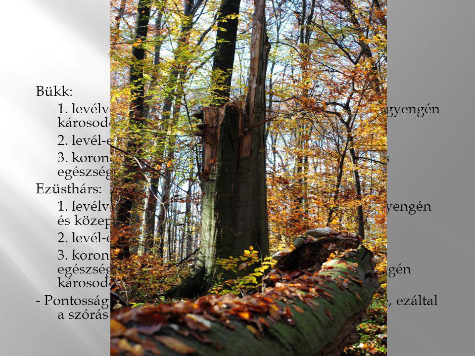 Az erdő egészsége