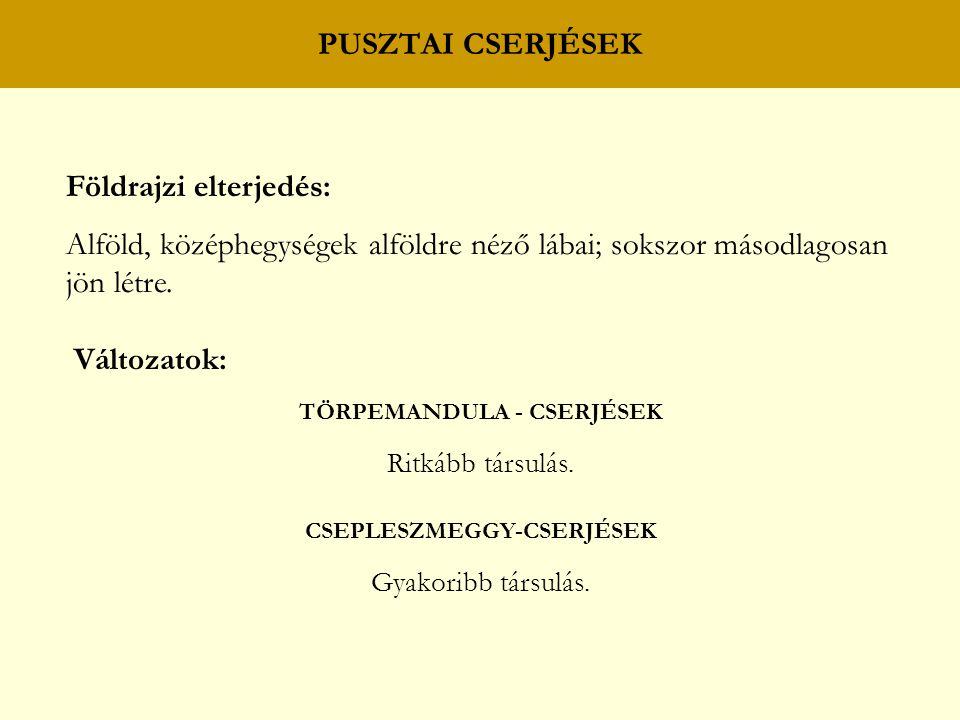 TÖRPEMANDULA - CSERJÉSEK CSEPLESZMEGGY-CSERJÉSEK