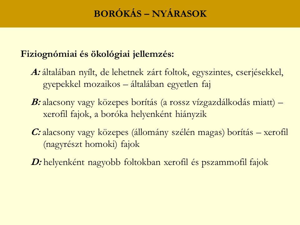 BORÓKÁS – NYÁRASOK Fiziognómiai és ökológiai jellemzés: A: általában nyílt, de lehetnek zárt foltok, egyszintes, cserjésekkel,