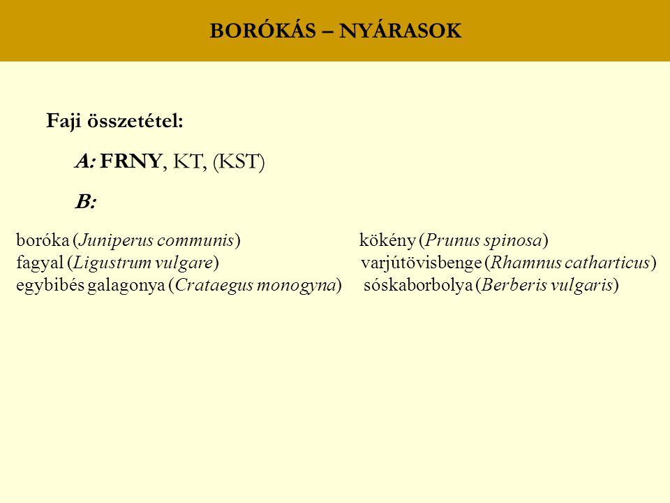 BORÓKÁS – NYÁRASOK Faji összetétel: A: FRNY, KT, (KST) B: