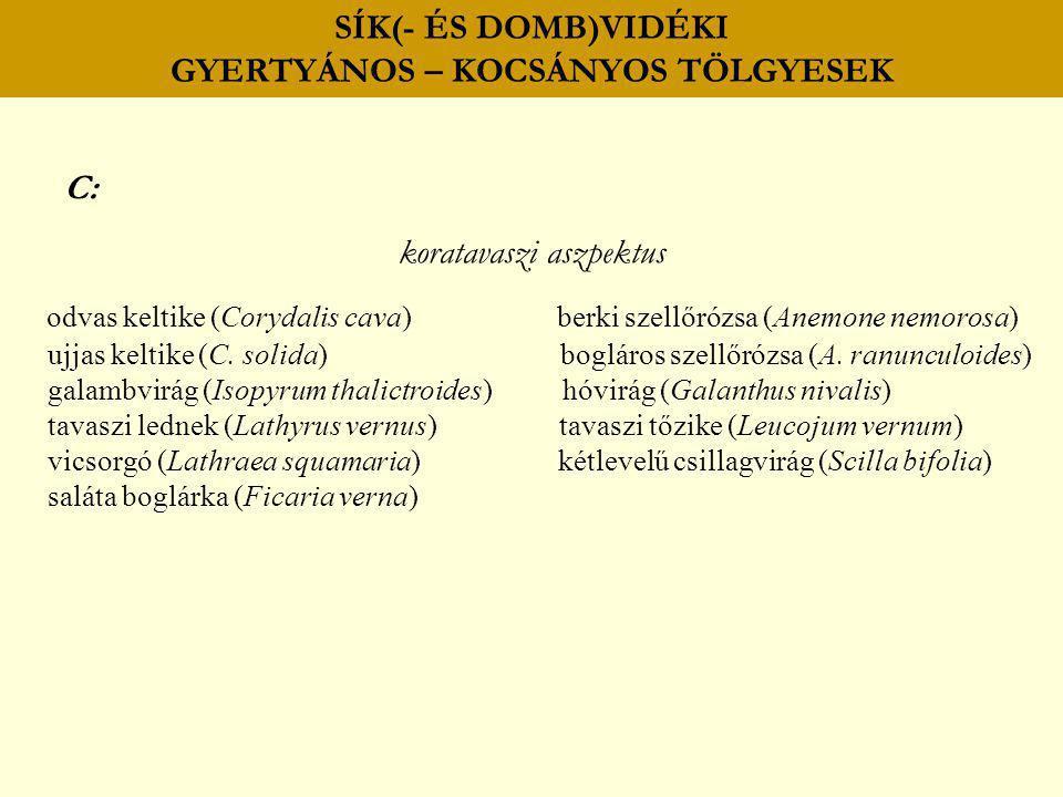 SÍK(- ÉS DOMB)VIDÉKI GYERTYÁNOS – KOCSÁNYOS TÖLGYESEK