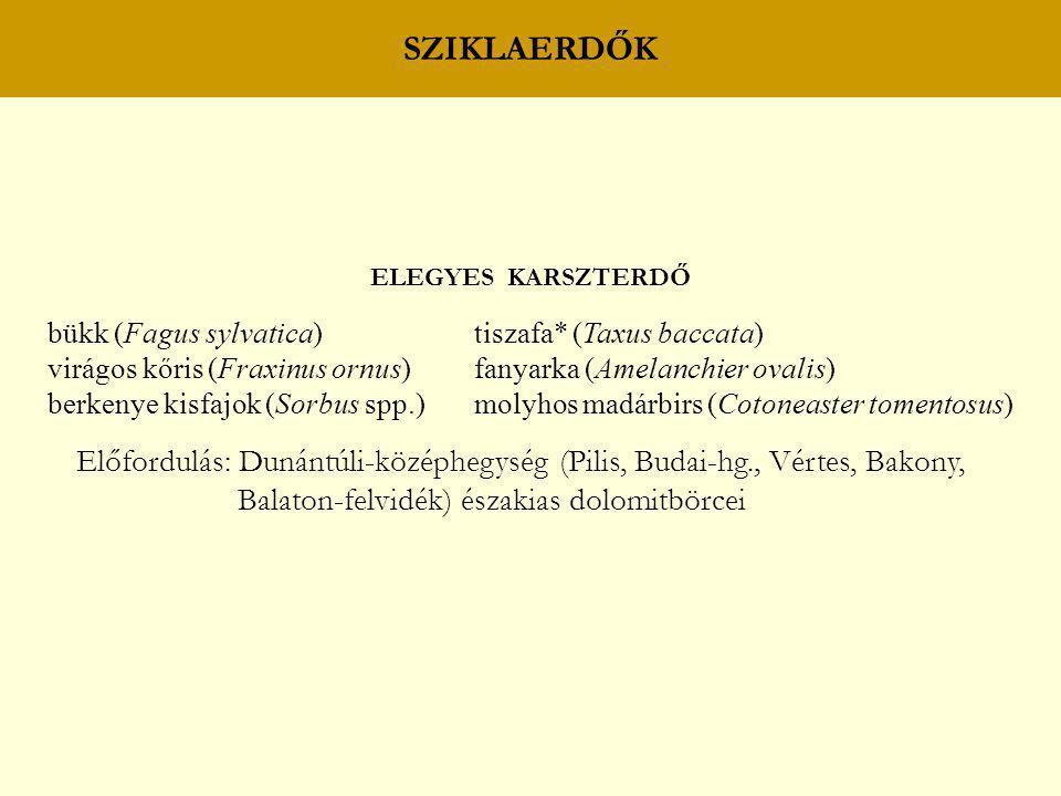 SZIKLAERDŐK ELEGYES KARSZTERDŐ. bükk (Fagus sylvatica) tiszafa* (Taxus baccata)
