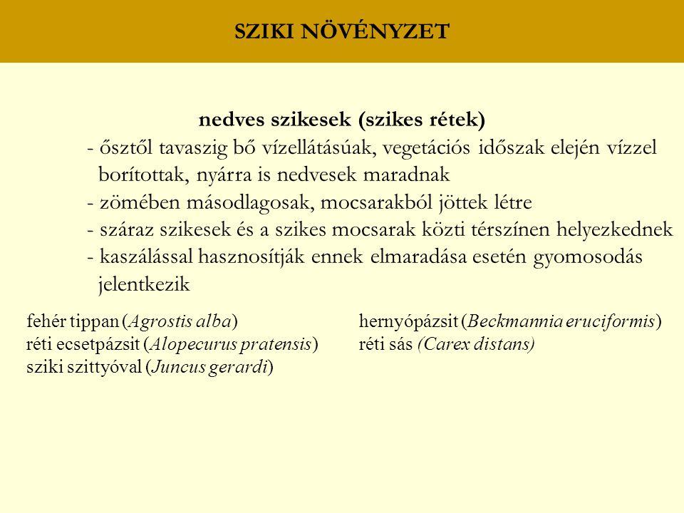 nedves szikesek (szikes rétek)