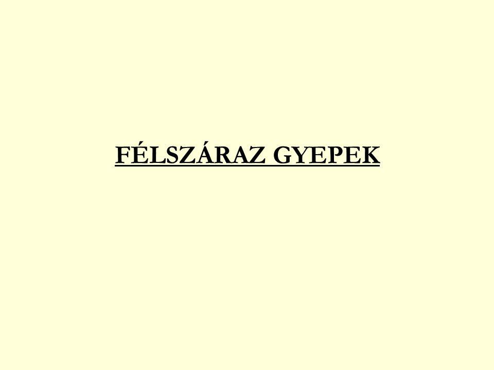 FÉLSZÁRAZ GYEPEK