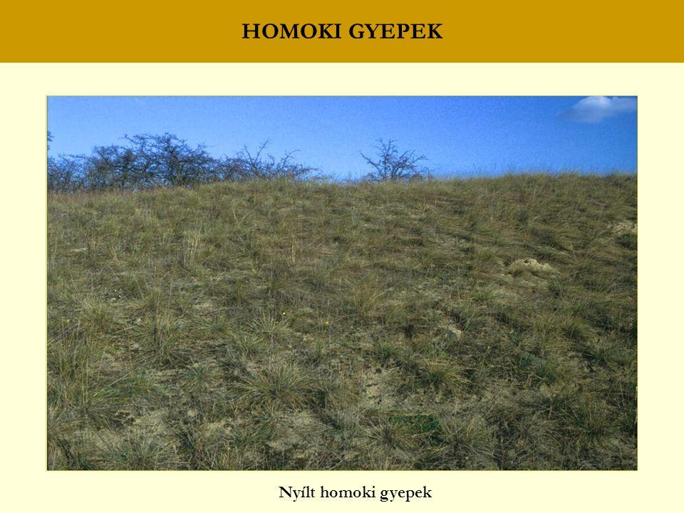 HOMOKI GYEPEK Nyílt homoki gyepek