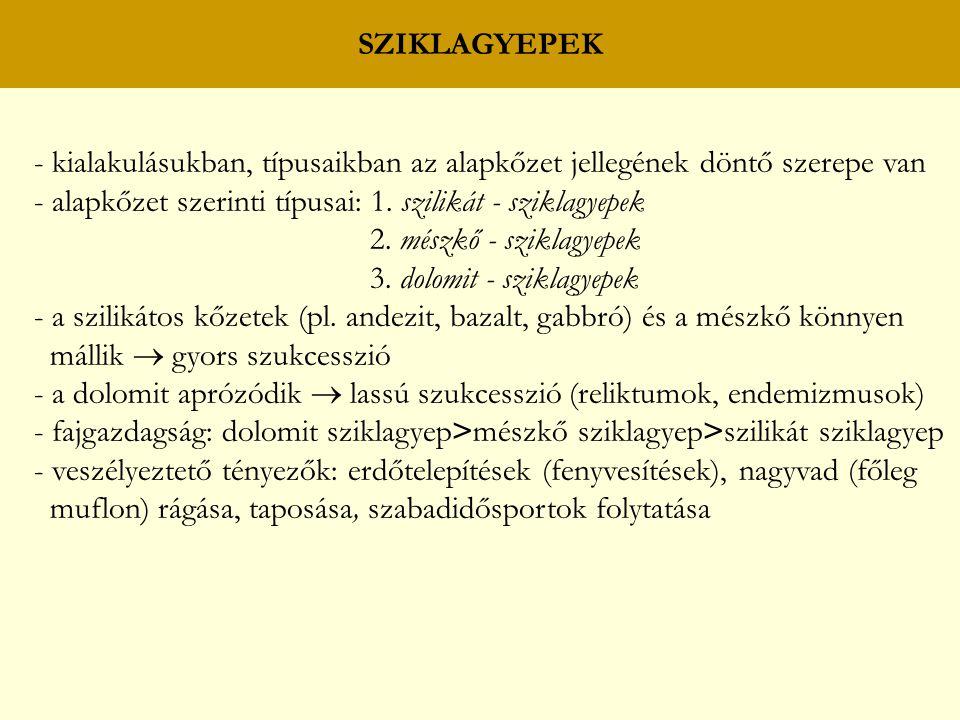 SZIKLAGYEPEK - kialakulásukban, típusaikban az alapkőzet jellegének döntő szerepe van. - alapkőzet szerinti típusai: 1. szilikát - sziklagyepek.
