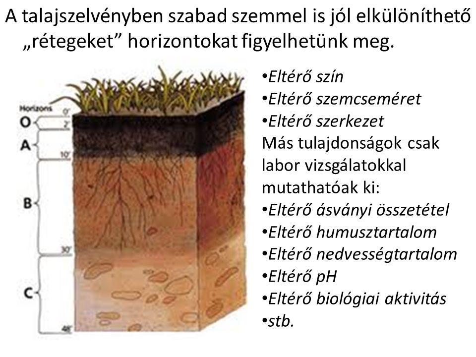 """A talajszelvényben szabad szemmel is jól elkülöníthető """"rétegeket horizontokat figyelhetünk meg."""