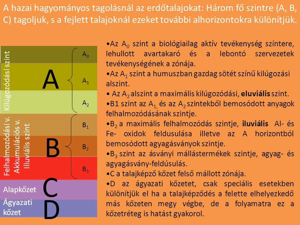 A hazai hagyományos tagolásnál az erdőtalajokat: Három fő szintre (A, B, C) tagoljuk, s a fejlett talajoknál ezeket további alhorizontokra különítjük.