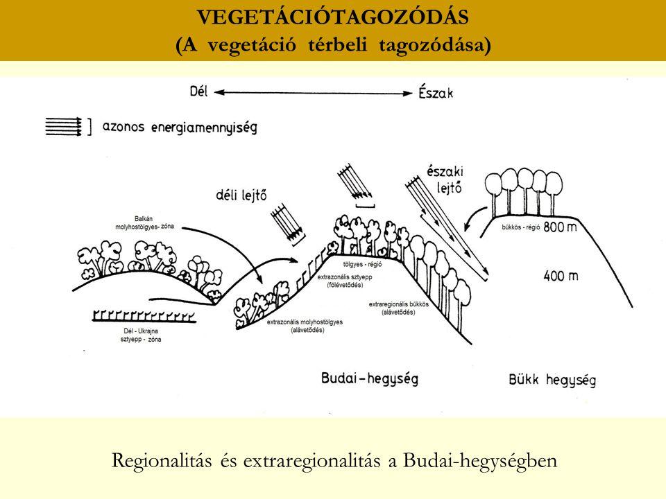 VEGETÁCIÓTAGOZÓDÁS (A vegetáció térbeli tagozódása)