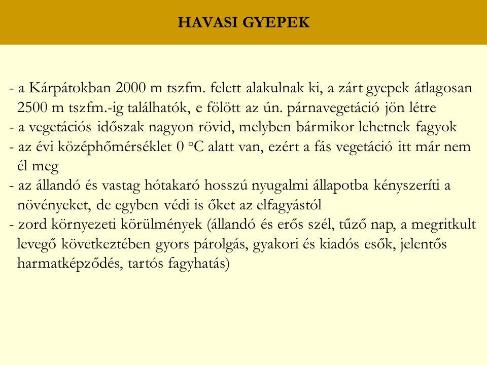 HAVASI GYEPEK - a Kárpátokban 2000 m tszfm. felett alakulnak ki, a zárt gyepek átlagosan.