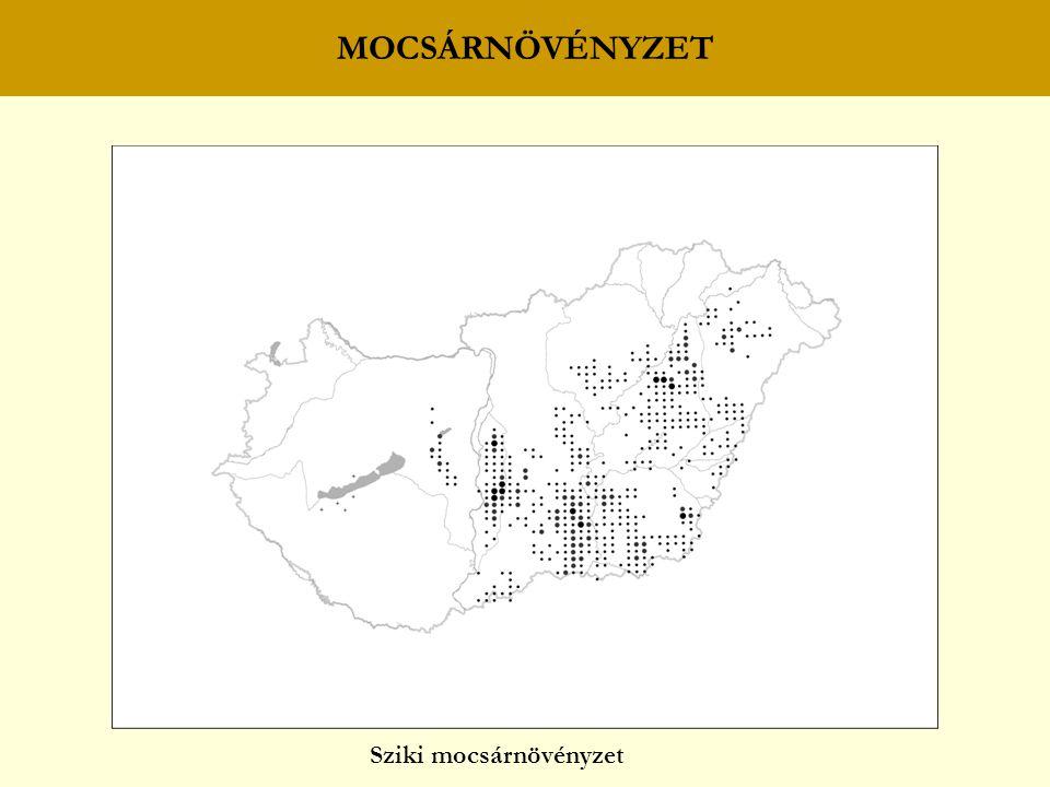 MOCSÁRNÖVÉNYZET Sziki mocsárnövényzet