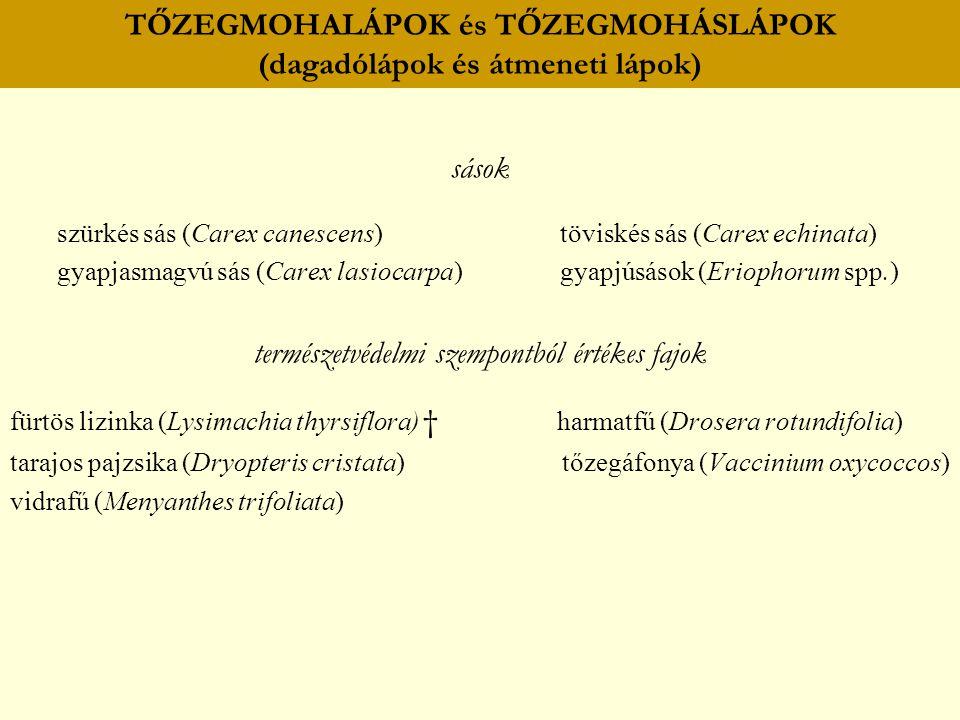 TŐZEGMOHALÁPOK és TŐZEGMOHÁSLÁPOK (dagadólápok és átmeneti lápok)
