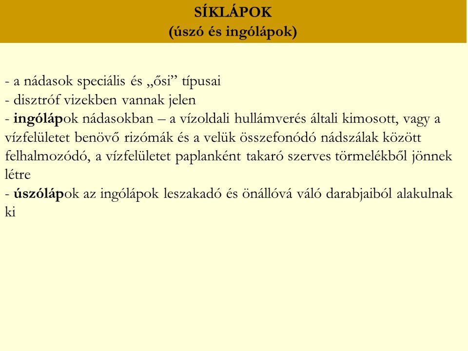 SÍKLÁPOK (úszó és ingólápok)