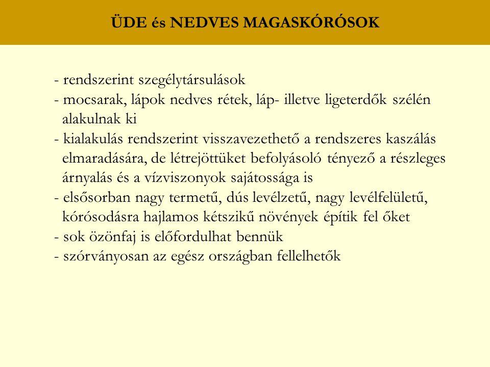 ÜDE és NEDVES MAGASKÓRÓSOK