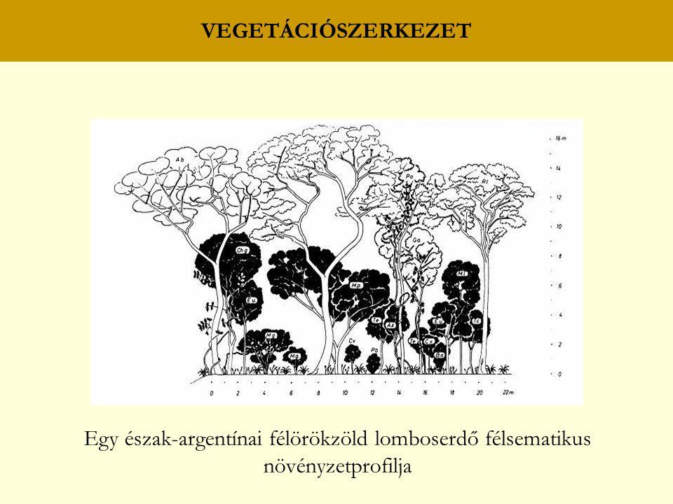 Egy észak-argentínai félörökzöld lomboserdő félsematikus
