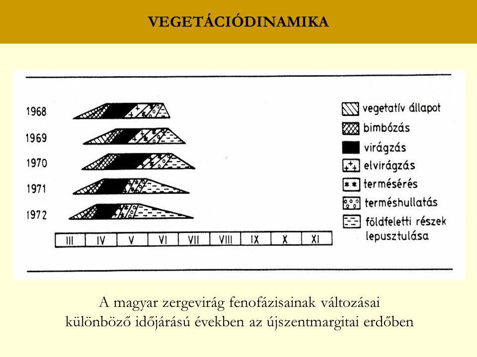 A magyar zergevirág fenofázisainak változásai