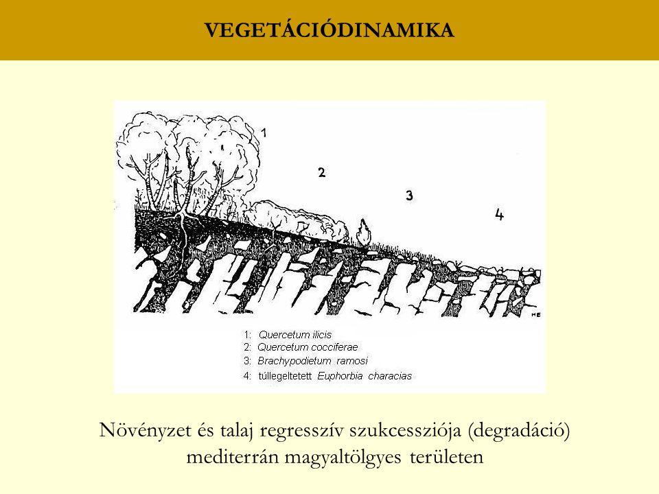VEGETÁCIÓDINAMIKA Növényzet és talaj regresszív szukcessziója (degradáció) mediterrán magyaltölgyes területen.