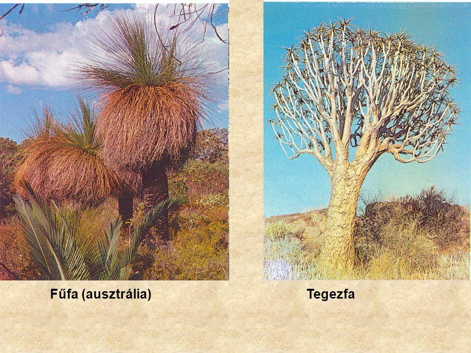 Fűfa (ausztrália) Tegezfa