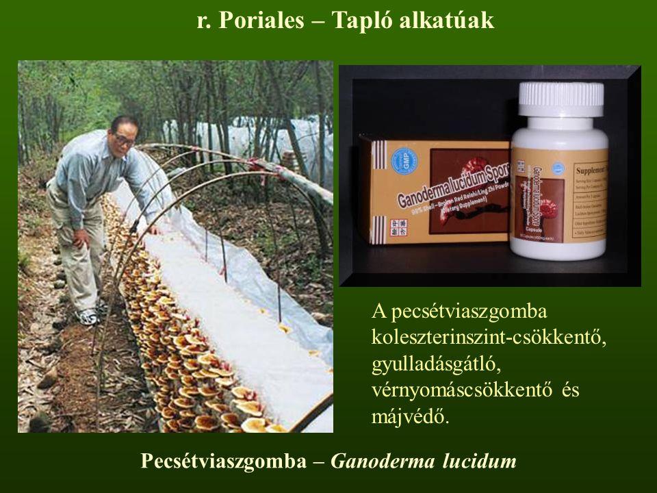 r. Poriales – Tapló alkatúak Pecsétviaszgomba – Ganoderma lucidum