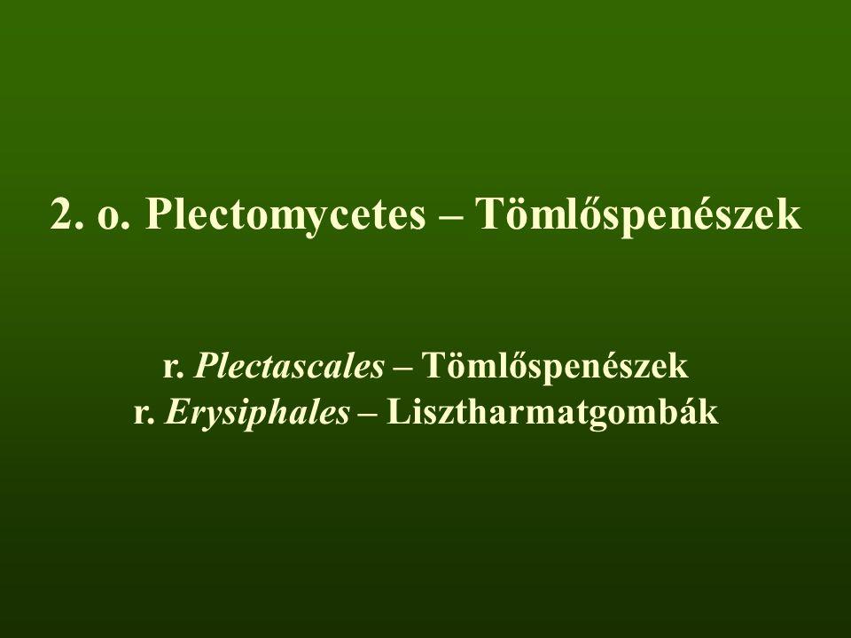 r. Plectascales – Tömlőspenészek r. Erysiphales – Lisztharmatgombák