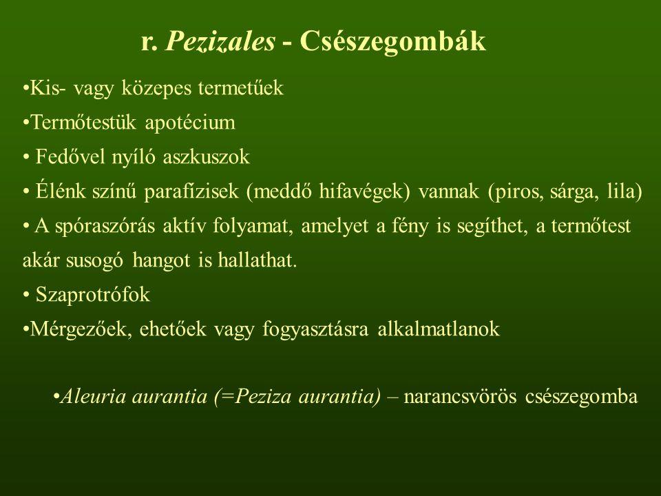 r. Pezizales - Csészegombák