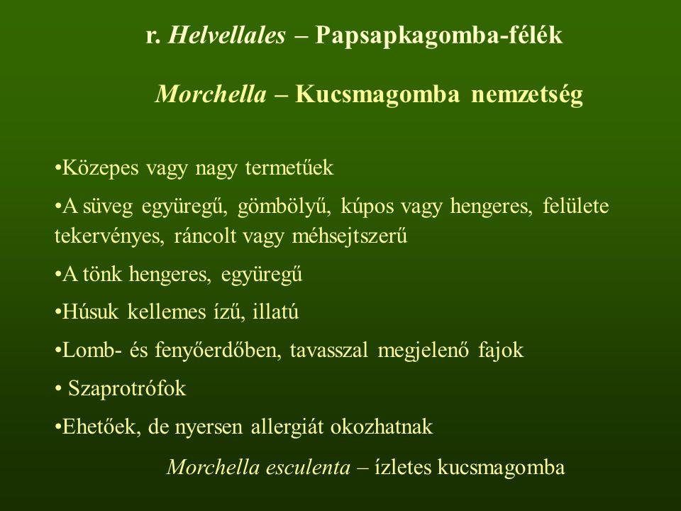r. Helvellales – Papsapkagomba-félék