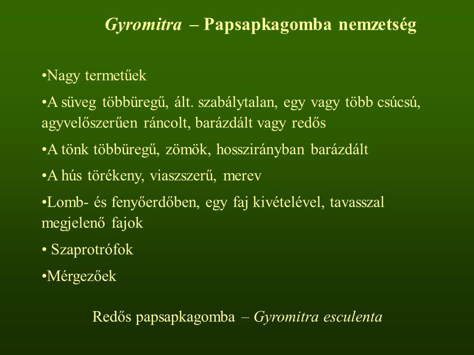 Gyromitra – Papsapkagomba nemzetség