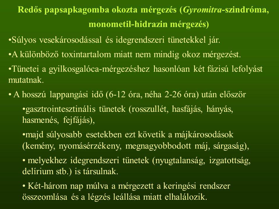 Redős papsapkagomba okozta mérgezés (Gyromitra-szindróma, monometil-hidrazin mérgezés)