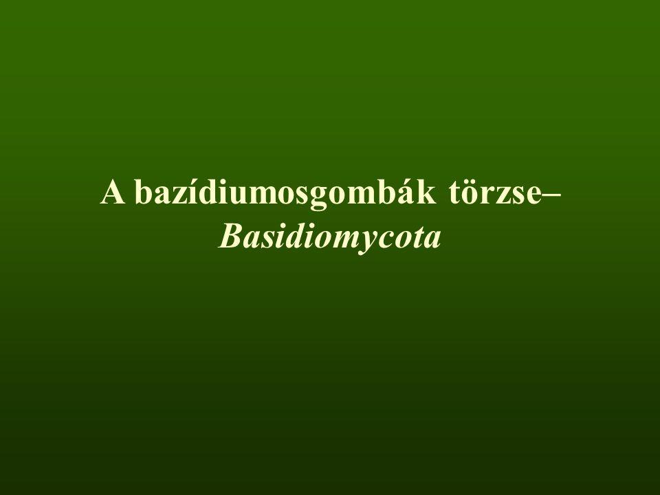 A bazídiumosgombák törzse– Basidiomycota