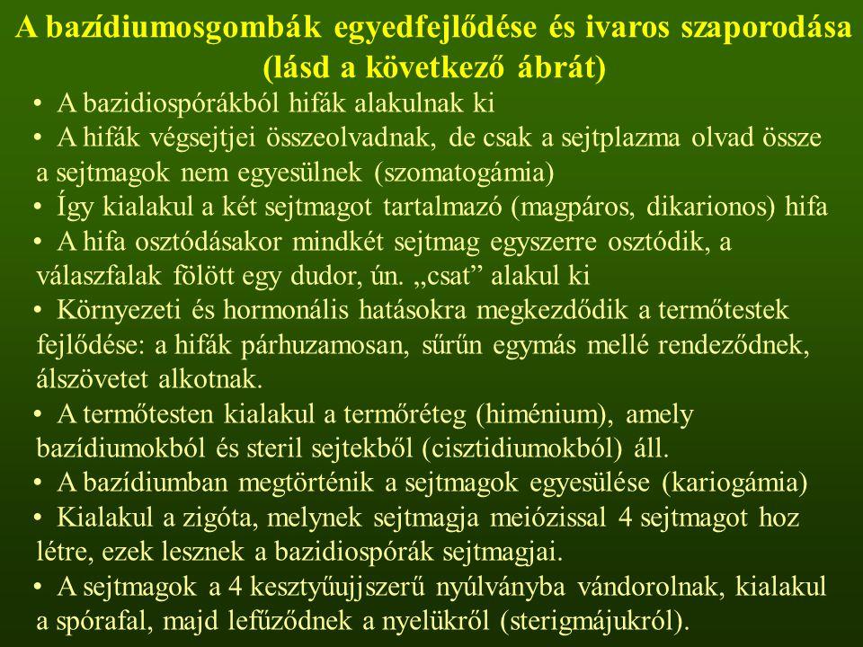 A bazídiumosgombák egyedfejlődése és ivaros szaporodása