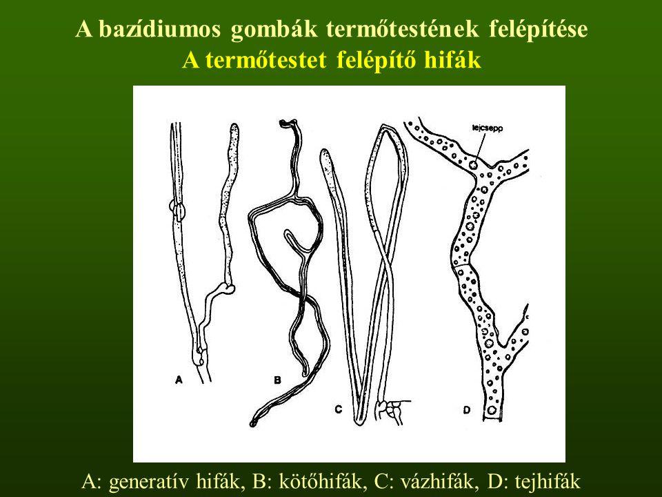 A bazídiumos gombák termőtestének felépítése