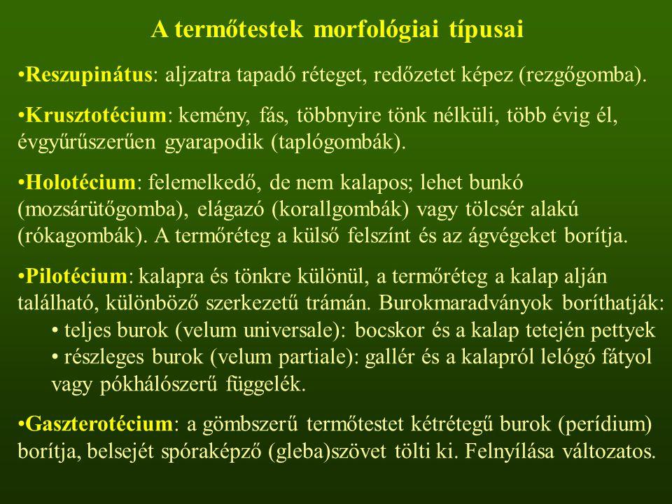 A termőtestek morfológiai típusai