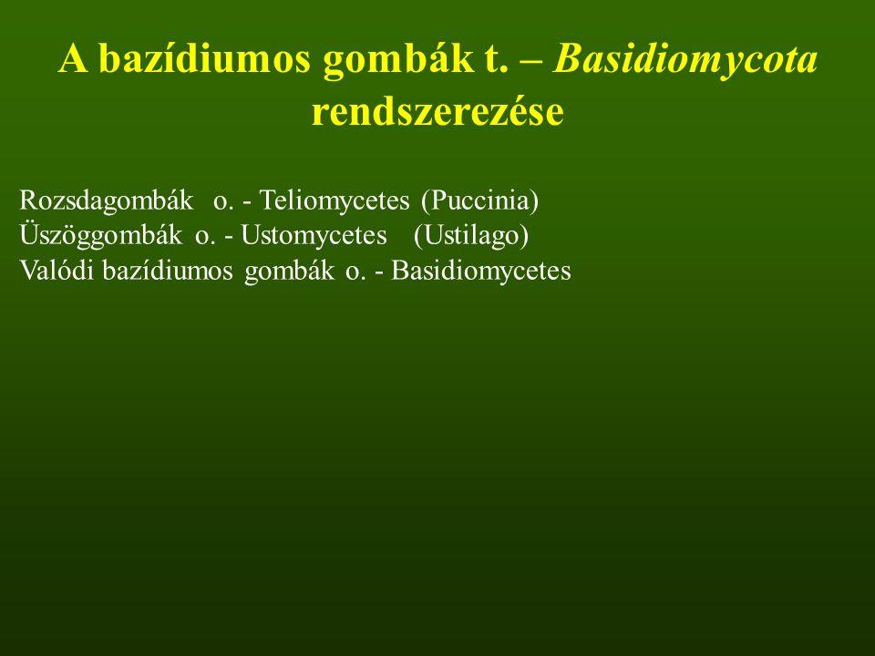 A bazídiumos gombák t. – Basidiomycota rendszerezése