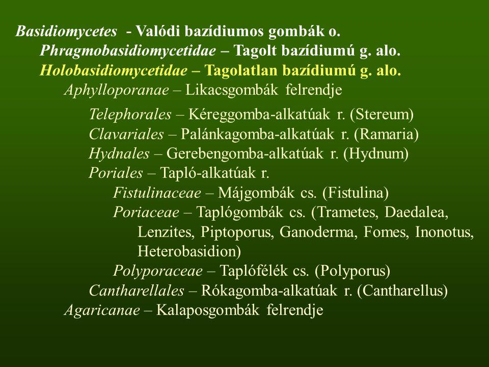 Basidiomycetes - Valódi bazídiumos gombák o.