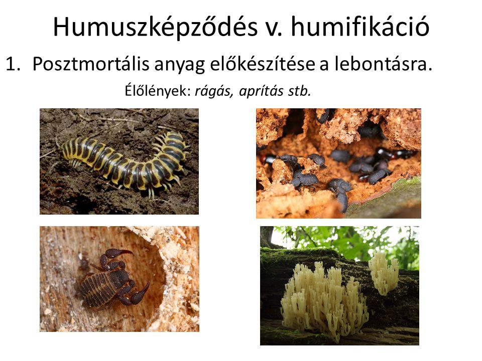 Humuszképződés v. humifikáció