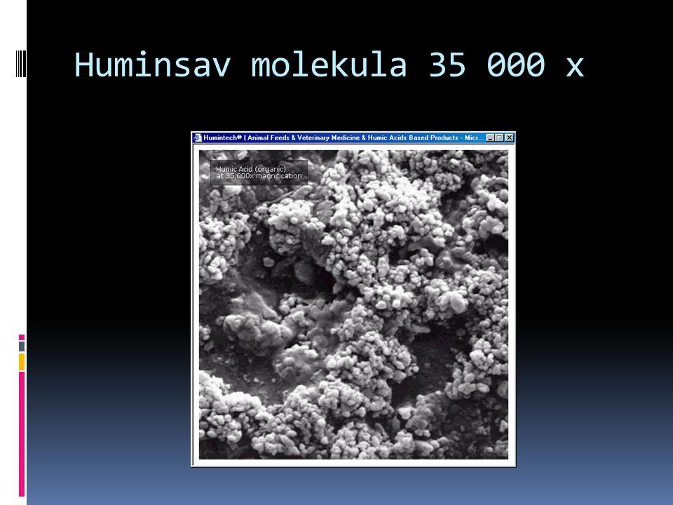 Huminsav molekula 35 000 x