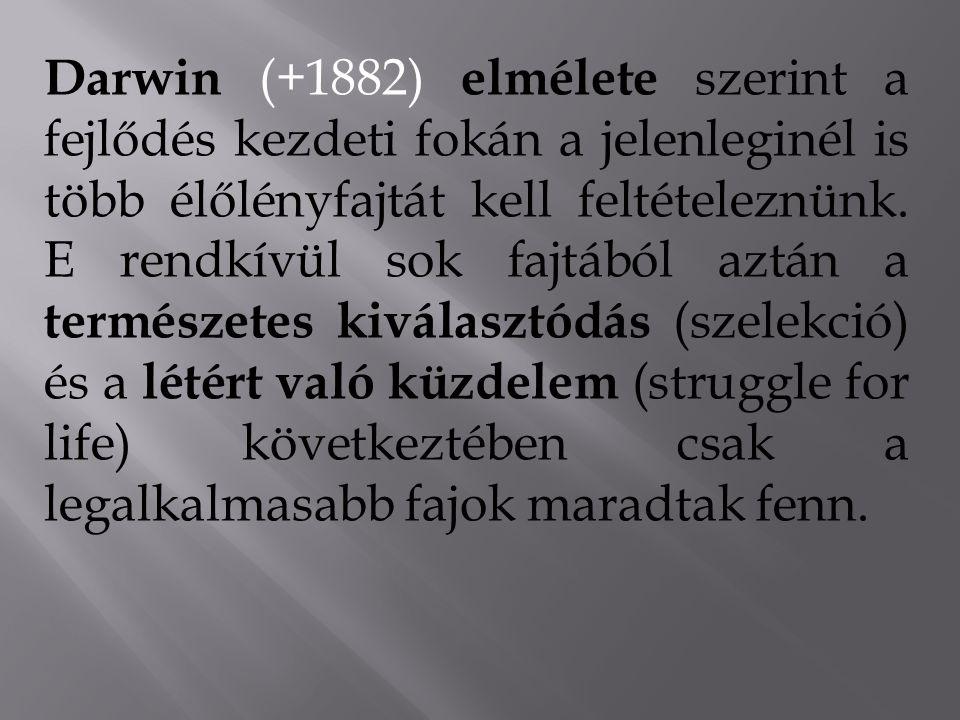 Darwin (+1882) elmélete szerint a fejlődés kezdeti fokán a jelenleginél is több élőlényfajtát kell feltételeznünk.