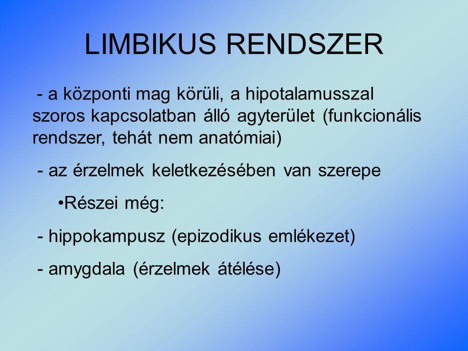 LIMBIKUS RENDSZER - az érzelmek keletkezésében van szerepe