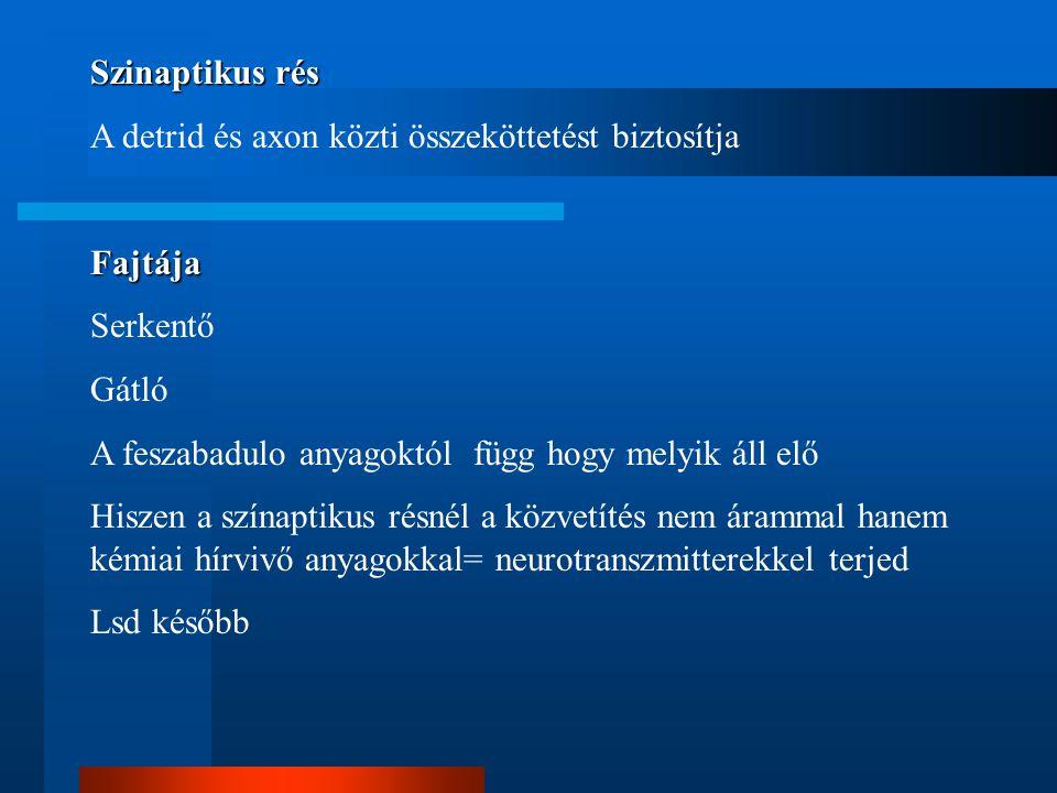 Szinaptikus rés A detrid és axon közti összeköttetést biztosítja. Fajtája. Serkentő. Gátló. A feszabadulo anyagoktól függ hogy melyik áll elő.