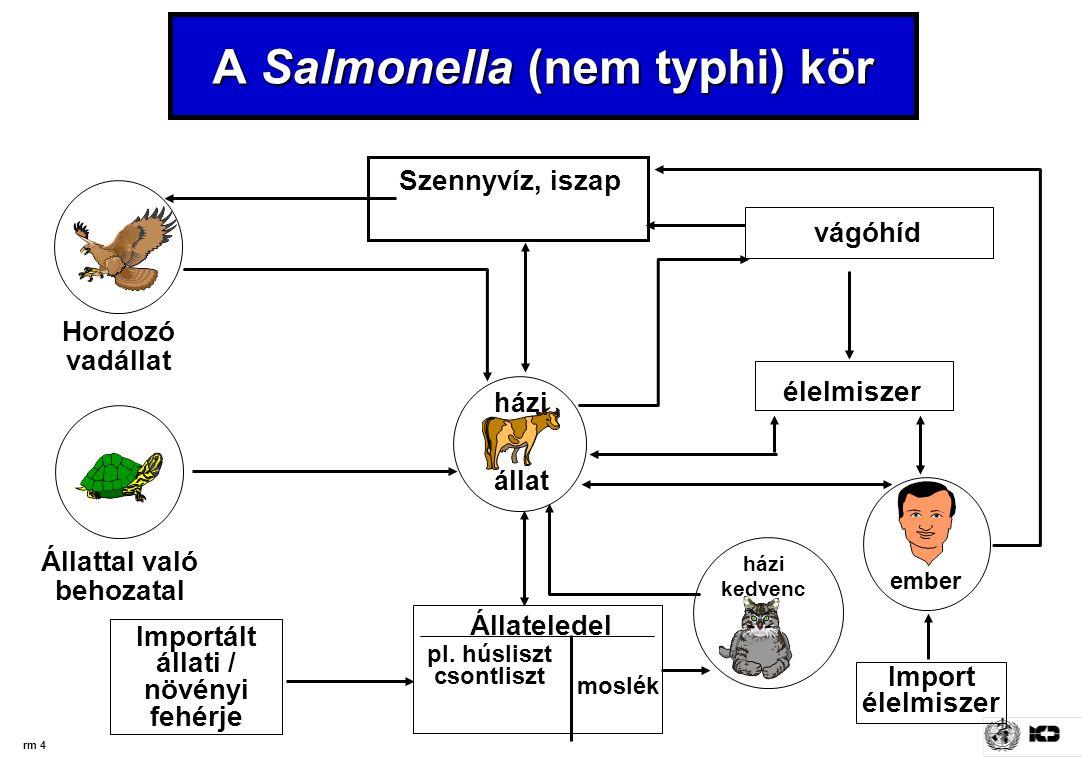 A Salmonella (nem typhi) kör