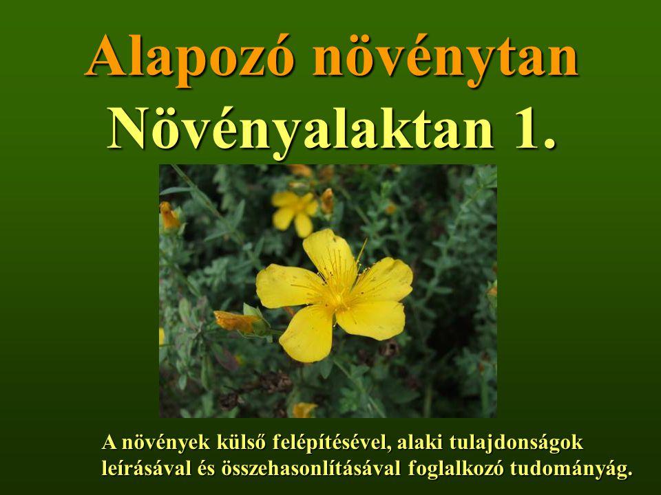 Alapozó növénytan Növényalaktan 1.
