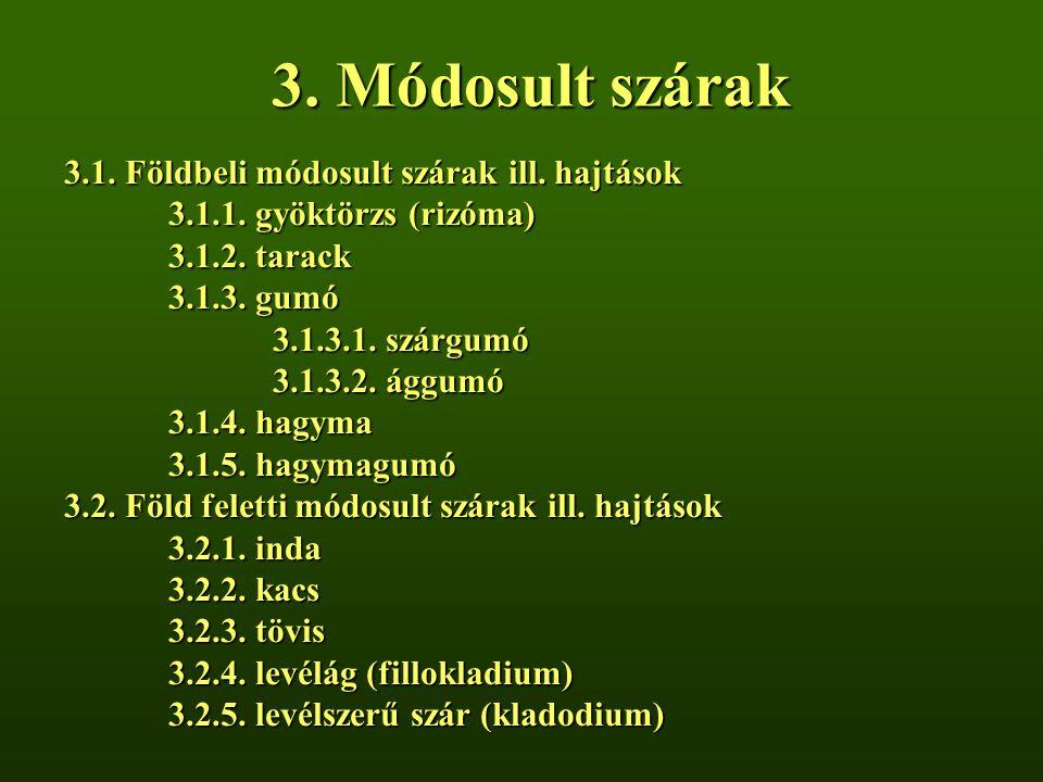3. Módosult szárak 3.1. Földbeli módosult szárak ill. hajtások