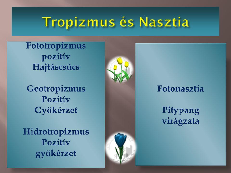 Tropizmus és Nasztia Tropizmus Gyököcske rügyecske Nasztia Pl. mimóza
