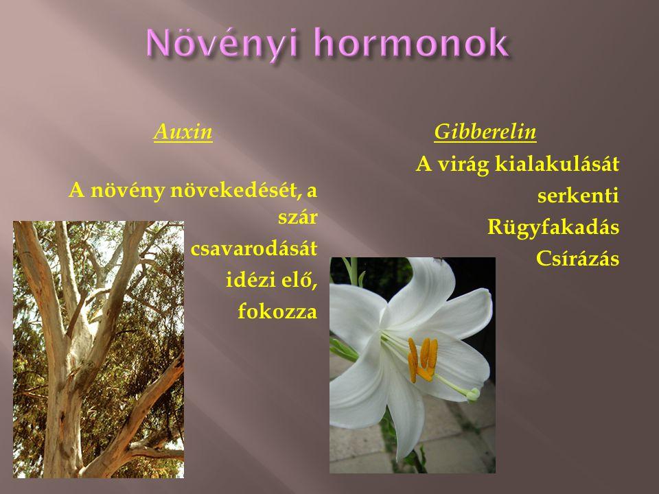 Növényi hormonok Auxin A növény növekedését, a szár csavarodását idézi elő, fokozza Gibberelin A virág kialakulását serkenti Rügyfakadás Csírázás