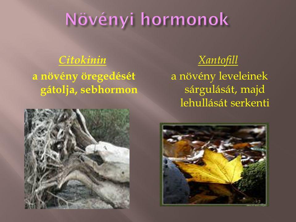 Citokinin a növény öregedését gátolja, sebhormon