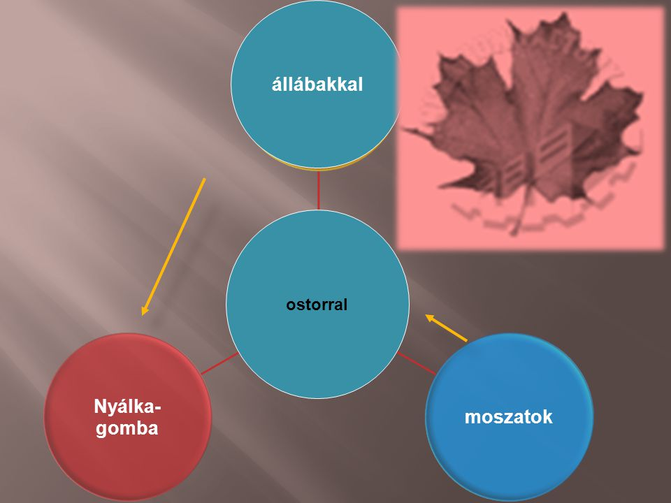 Aktív külső hely- változtató mozgás prokarióták moszatok Nyálka- gomba